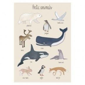 Sebra Arktiska Djur Poster